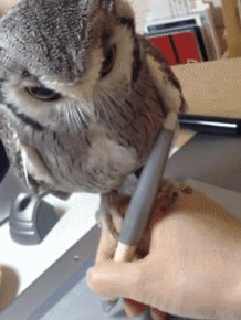Owls Are Strange But Hilarious Creatures Creatures