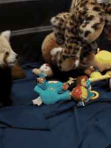 Red Pandas Like To Play