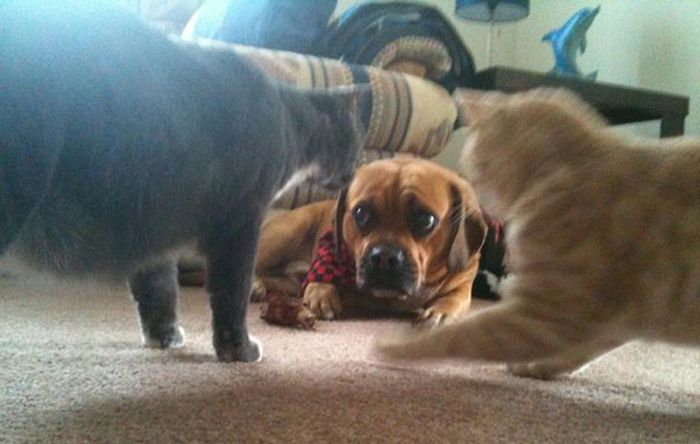 It Didn't Take Long For These Dogs To Realize That They Messed Up
