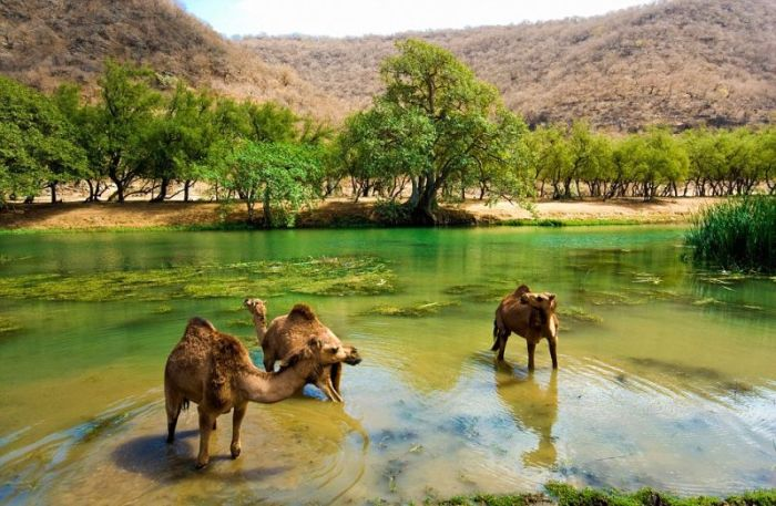 Salalah Transforms Into A Beautiful Oasis