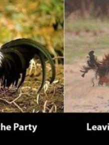 Funny Before and After Pictures That Tell It Like It Is