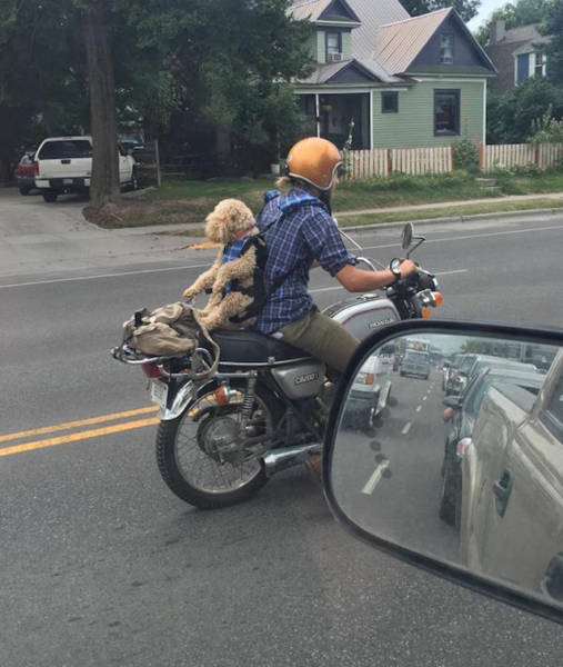 Sometimes You See The Strangest Things While Driving