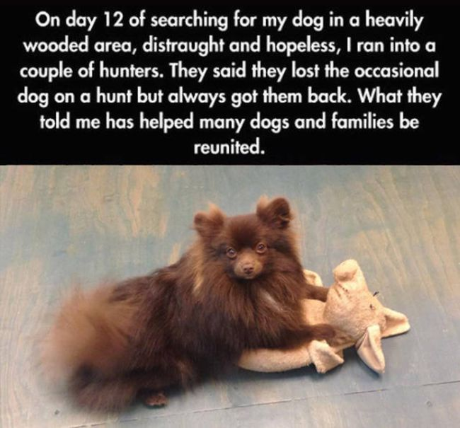Tips And Tricks That Will Help You Find Your Lost Dog