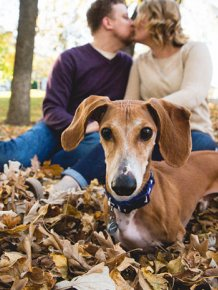 Couple's Engagement Pictures Get Photobombed By A Wiener Dog