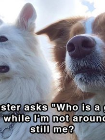 Hilarious Thoughts That Dogs Have In The Shower