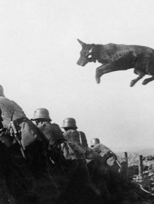 Fascinating Photos Collected From History