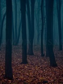 Fog Forests