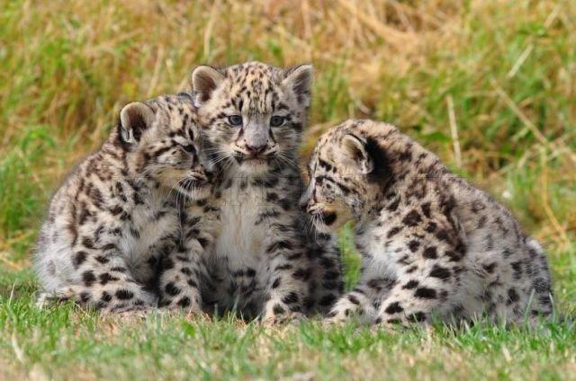 Cute Animals, part 5