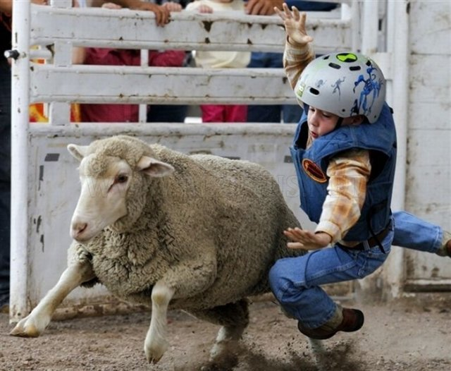 Children riding sheep