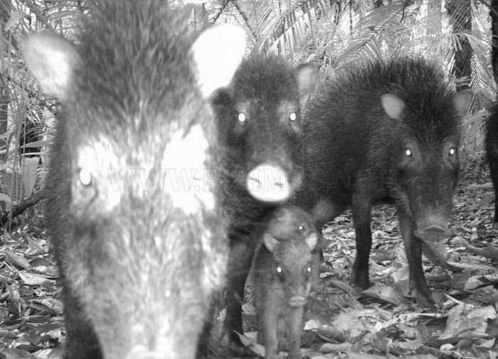Amazing Animal Pictures Made by Hidden Cameras
