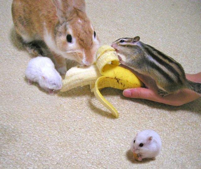 Funny Animals, part 22