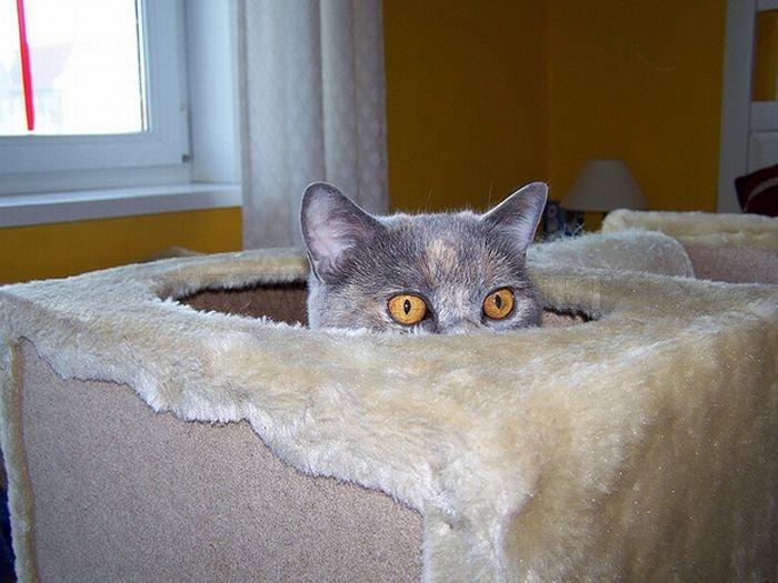 Spy Cats Pics
