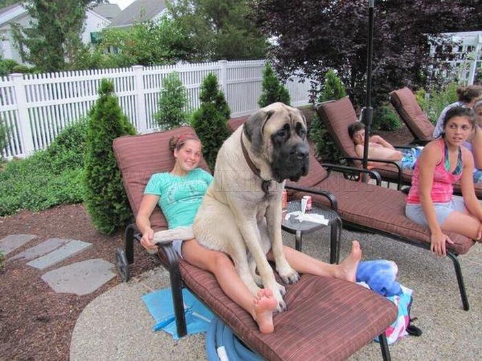 Dogs' True Friendship
