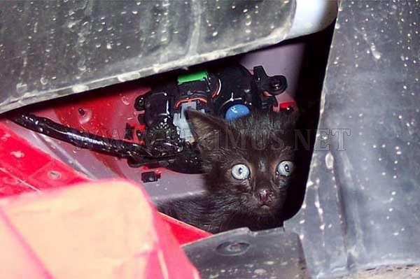 Hidden Cat in Bumper