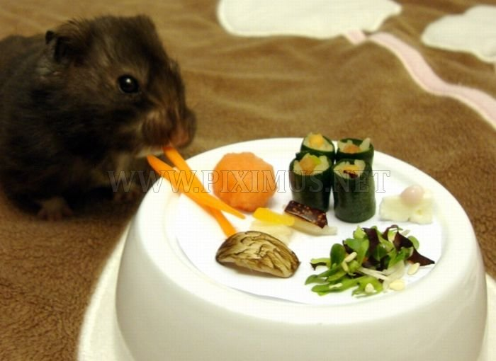 Sushi for my little friend