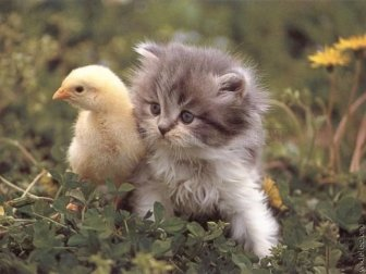 Amazing Collection of Cute Animals