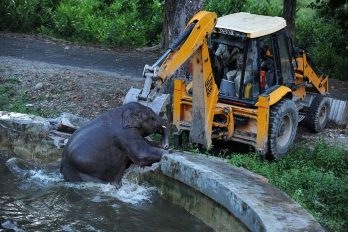 Baby Elephant Rescue From Drowning