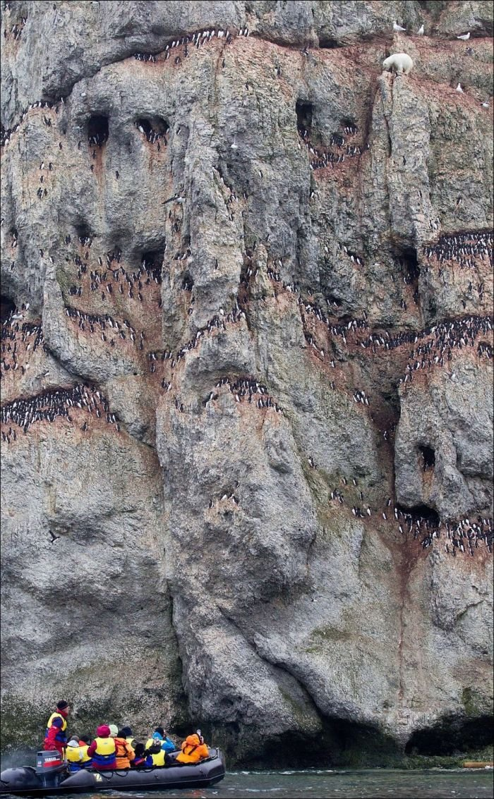 Hungry Bear in Insane 300ft Climb