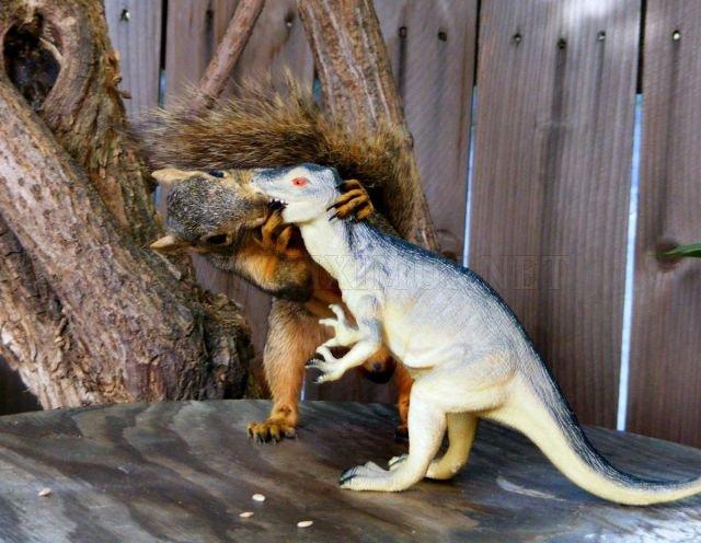 Funny Animals, part 24