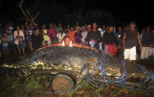 Huge Crocodile is caught in Philippines