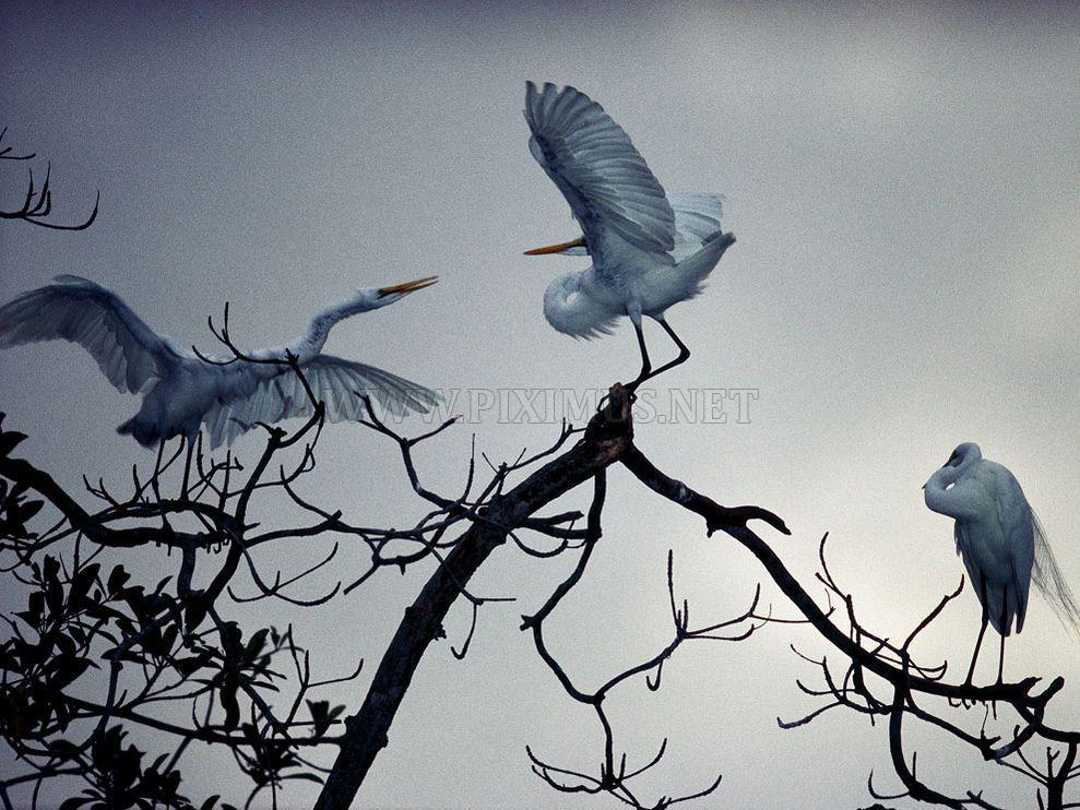 Amazing Photographs