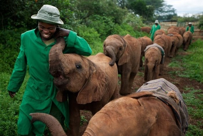 Το Ορφανοτροφείο μωρό ελέφαντας στην Κένυα