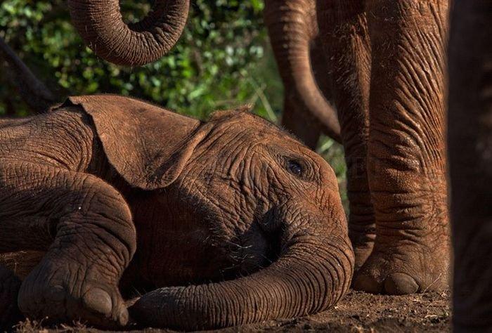 The Baby Elephant Orphanage in Kenya