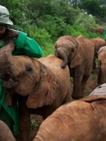 The Baby Elephant Orphanage in Kenya