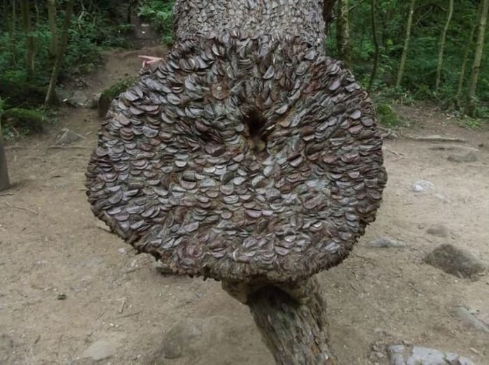 Money Tree That Brings Good Luck in Great Britain