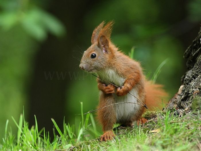Awesome Squirrels