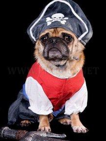 Pug Pirates