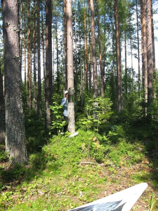 Invisible Trees in Forest Prank
