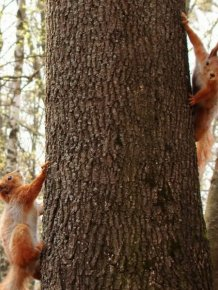 Squirrel Photography