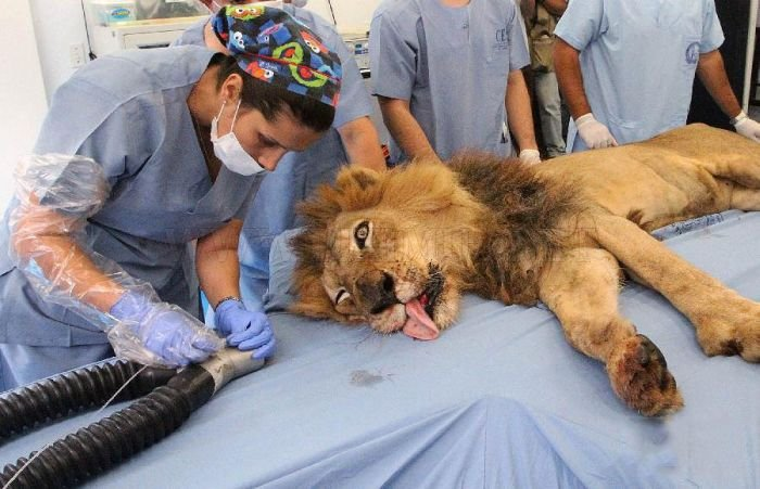 Tiger and Lion Dentistry