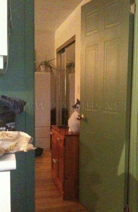 Sneaky Kitties