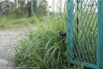 Sneaky Kitties