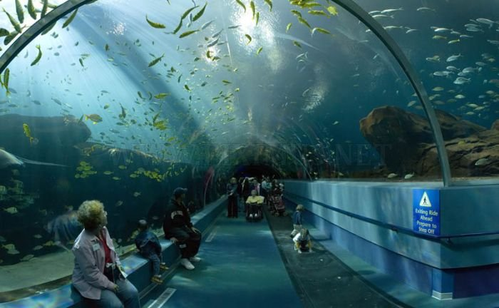 Incredible World's Largest Aquarium in Atlanta