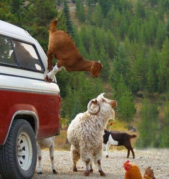 Funny Animals, part 31