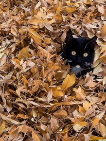 Cats Love Fall