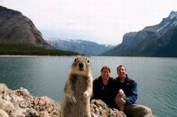 Photobombs, part 16