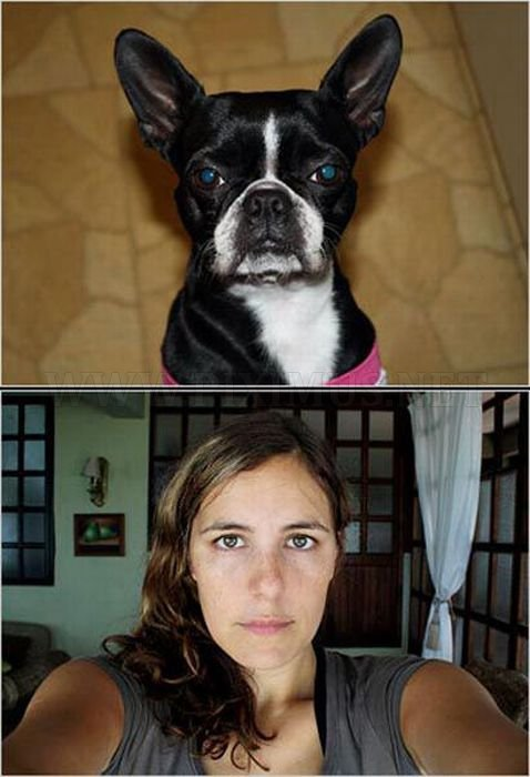 Dogs vs Dog Owners