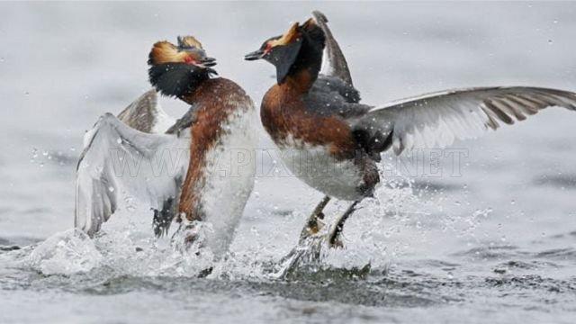 Amazing photos of birds