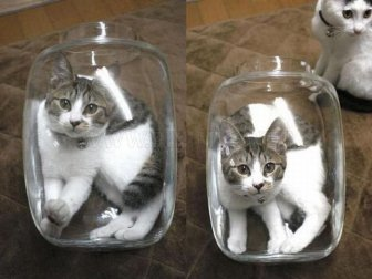 Two Cats One Jar