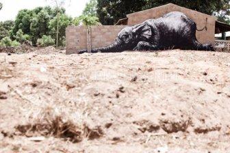 Street Art in Africa