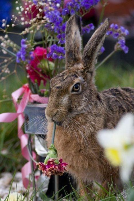 2011 Best Wildlife Photos
