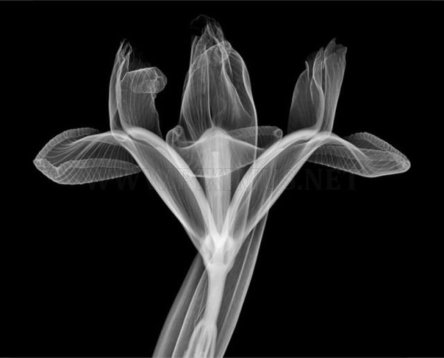 Amazing X-Ray Artwork