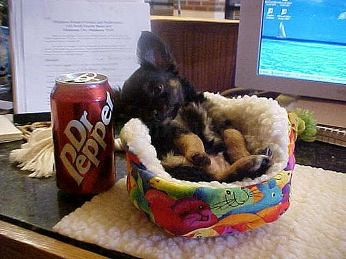 Puppies The Size Of Soda Cans