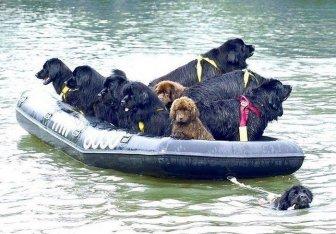 Life Rescue Dog