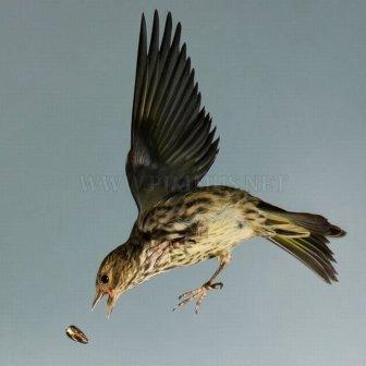 Birds in Mid-Flight