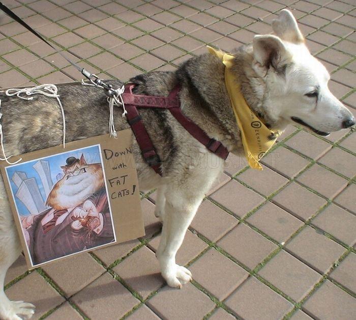 Τα σκυλιά του Καταλαμβάνουν Wall Street